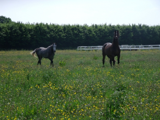 FRANCE, Normandy region - professional notorious stud farm with excellent facilities � 4M� - unique mandate