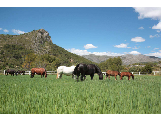 Pure-bred Spanish horse ranch for sale In Alicante province · Costa Blanca · Spain
