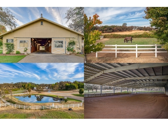 First Class Equestrian Horse Property for sale