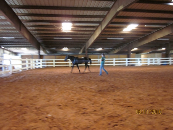 Active Boarding Training Event Facility- Indoor Arena-50 stalls-89 acres-3 Outdoor Arenas