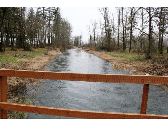 Branch of Santiam River