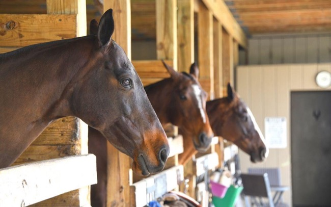 Equine Transportation Services