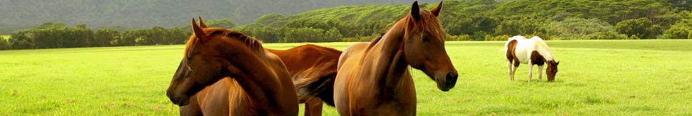 Horse Properties International - Terms and Conditions\r\n